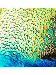 quadro-pavao-colorido