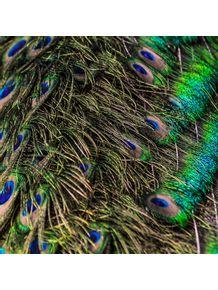quadro-cores-do-pavao