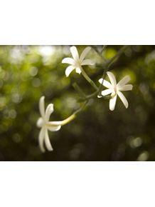 quadro-flores-brancas-fundo-verde