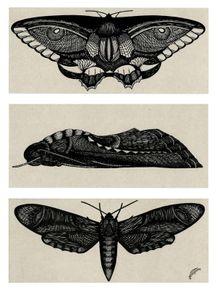 quadro-mariposas