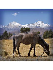 quadro-cavalo-andes