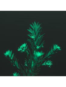 MOOD-PLANT-2