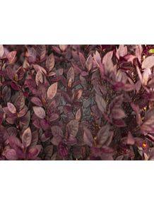 PURPLE-FLOWERS-NEW-ZEALAND
