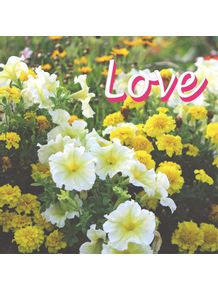 IMA---LOVE-AND-FLOWERS