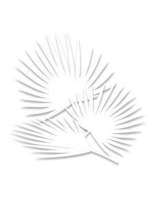 IMA---WHITE-TROPICAL-3