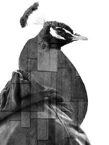 CITY-OF-BIRDS-01