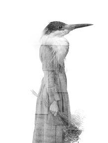 CITY-OF-BIRDS-06