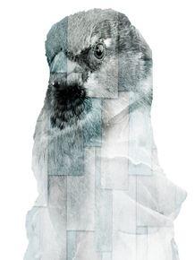 CITY-OF-BIRDS-18