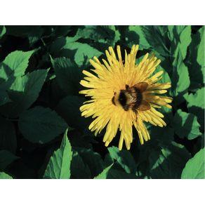 A(BEE)LHA