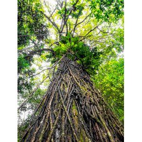 NO CORAÇÃO DA AMAZÔNIA - VERTICAL